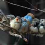 Birds huddled together