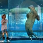 Seal in tank